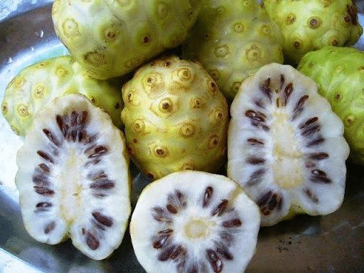 Lấy phần ruột trái nhàu làm thuốc đắp trị mụn cóc
